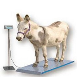 veterinary scales for weighing dogs, cats, alpaca and more