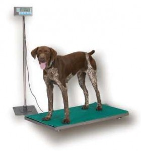 Cheap Veterinary Scales