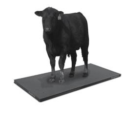 Rice Lake SLV Animal Livestock Scale